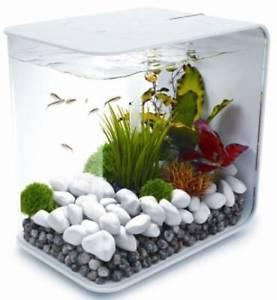 aquarium blanc