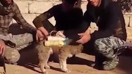 bombe chien