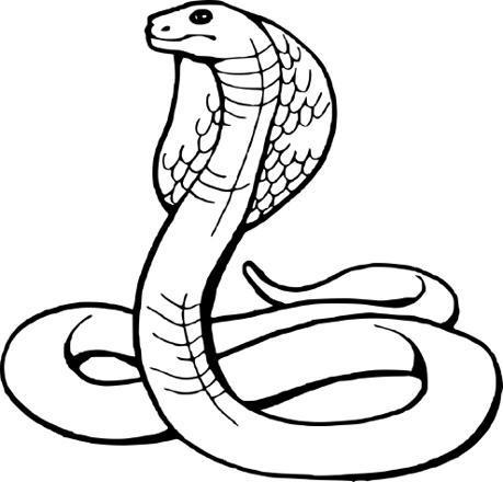 dessin de serpent facile