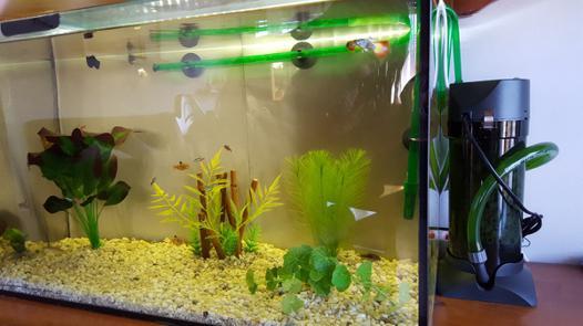 filtre externe aquarium silencieux