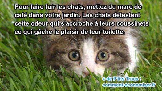 repulsif pour chats dans les jardins