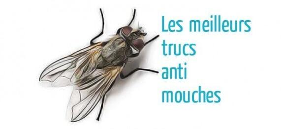 éliminer les mouches dans la maison