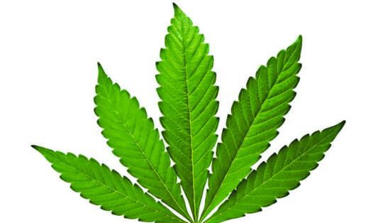 feuille marijuana