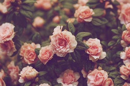 fleurs swag