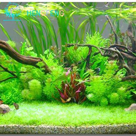 gazon aquarium