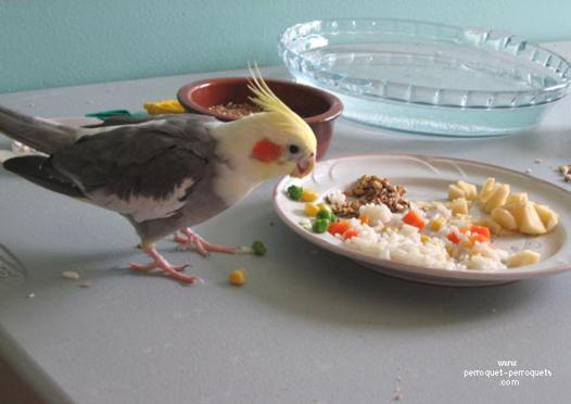 perruche calopsitte nourriture