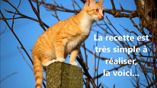 répulsif naturel chat jardin