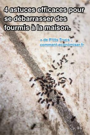 se débarrasser des fourmis
