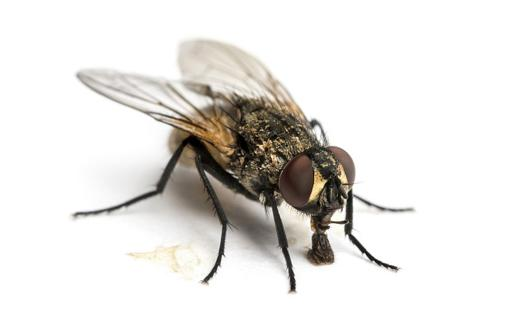 un mouche